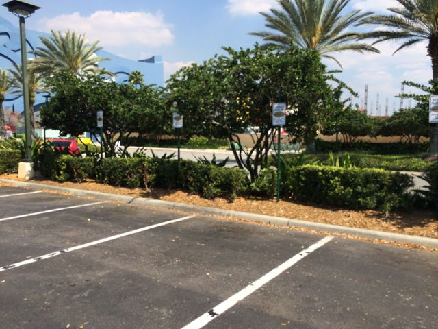 It looks like Downtown Disney is empty, but not so. The rest of the parking lot is filled with the exception of these spaces up front. Photo by J. Jeff Kober.