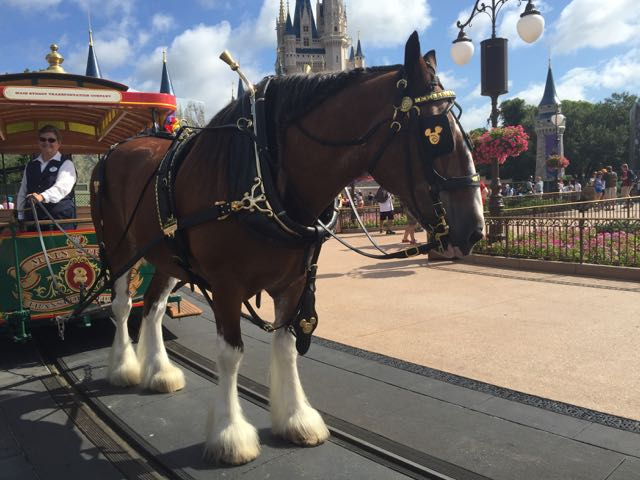 The horse and trolley awaits dancers as they go into the entertainment gig down Main Street U.S.A. Photo by J. Jeff Kober.