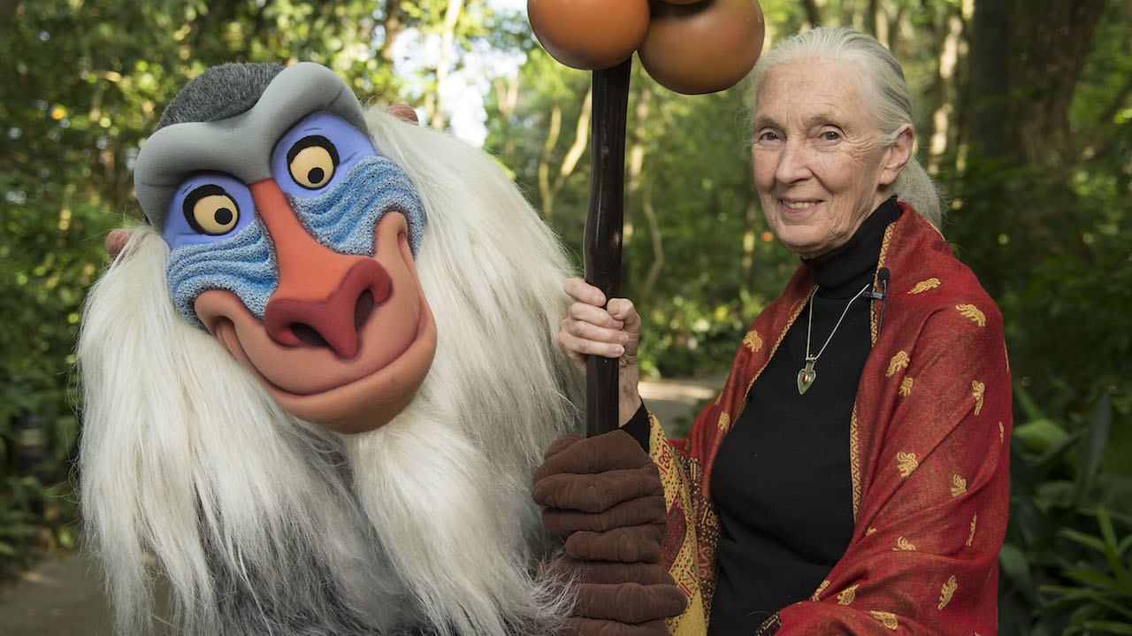 Dr. Jane Goodall with Rafiki at Disney's Animal Kingdom.